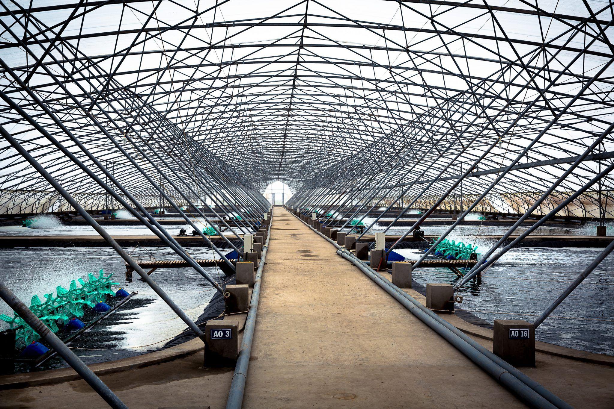 Viet-Uc, Vietnam - INVE Aquaculture