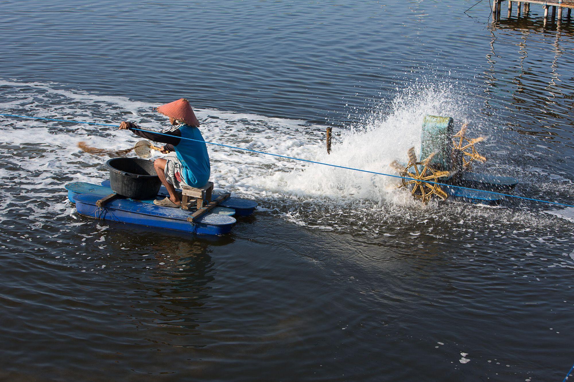PT Suri Tani Pemuka, Indonesia (2) - INVE Aquaculture